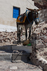 A donkey resting in stairs