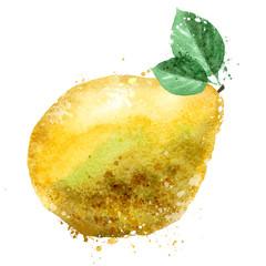 pomelo vector logo design template. fruit or food icon.