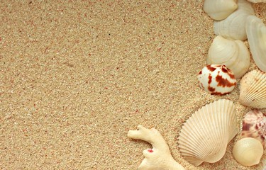 Sandy background with sea shells