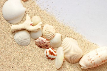 Sand background with sea shells  and paper