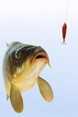 Fische 72