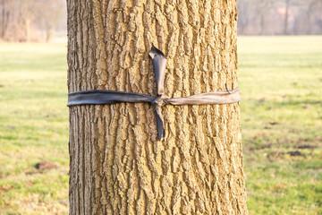 Baum mit Schleife