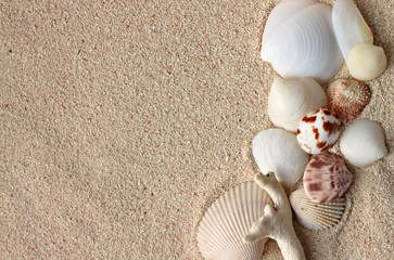 Seashells on beige coral sand background