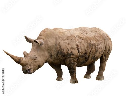 In de dag Neushoorn rhinoceros