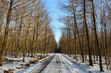 Waldweg im Winter mit Schnee