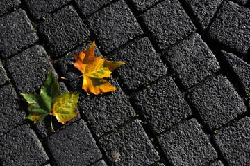 Charming fallen leaves on paving slabs