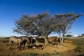 beautiful horser resting under trees