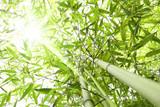 Fototapety Foresta di bambù con raggi di sole che entrano dalla chioma