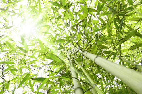 Fotobehang Bamboe Foresta di bambù con raggi di sole che entrano dalla chioma