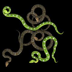 Snake on black background.