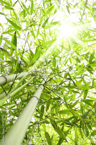 Papiers peints Bambou Foresta di bambù con raggi di sole che entrano dalla chioma