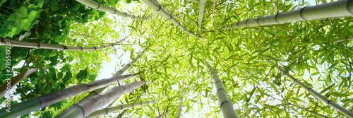 Tuinposter Bamboe Foresta di bambù