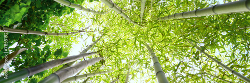 Foto Spatwand Bamboe Foresta di bambù
