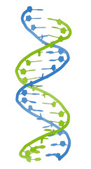 DNA molecular structure. Main carrier of genetic information.