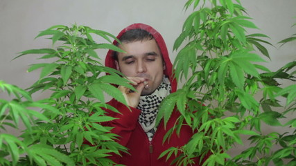 Man in hoodie smoking Marijuana joint and growing Cannabis plant