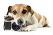dog lying near the camera staring tired upset