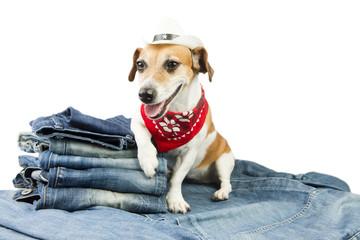 Fashionable dog advertises coolest designer jeans