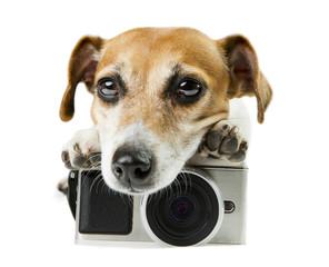 dog lying near photo camera staring tired upset