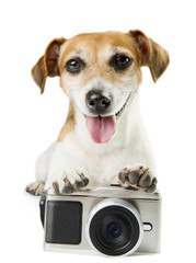 dog lying near the photo camera staring