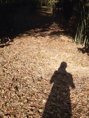 Shadow and leaves in the bamboo forest