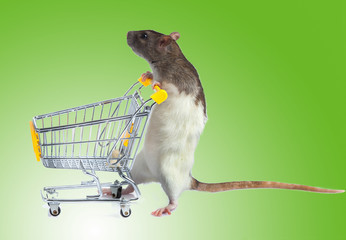 Rat with shopping cart  on green background. concept for pet sho