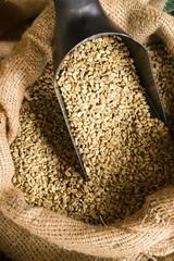 Raw Coffee Beans Seeds in Bulk Burlap Sack Production Warehouse
