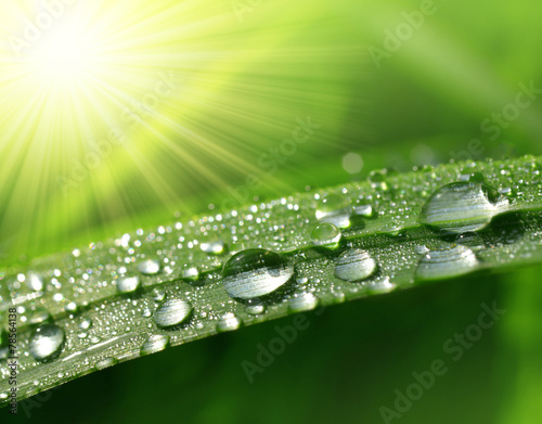 Fresh green grass with dew drops closeup. Nature Background © vencav