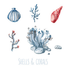 Watercolor set of shells and corals