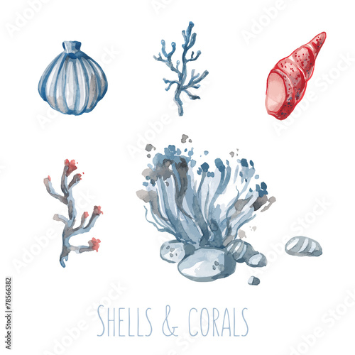 Fototapeta Watercolor set of shells and corals