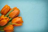 Fototapety Tulip.