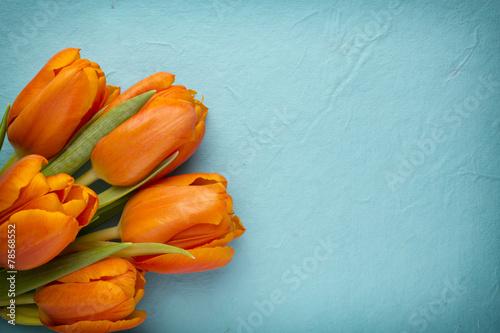 canvas print picture Tulip.