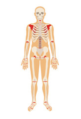 Skeleton. Vector flat illustration