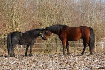 Pferdebegrüßung