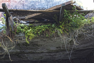 Ruins of shabby building covered by vegetation