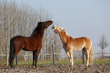 Pferdespiel3