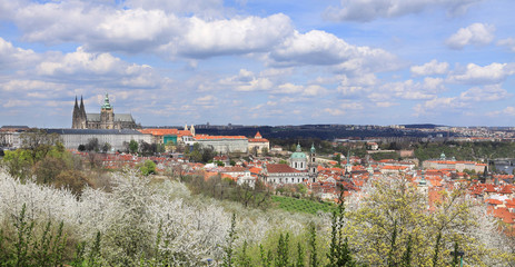 Spring Prague gothic Castle with flowering Trees, Czech Republic