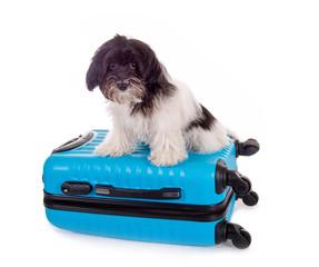 Kleiner Hund sitzt auf Koffer
