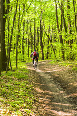Cyclist practicing mountain bike on a forest trail. The rider is