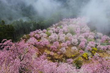 天空の庭 高見の郷のしだれ桜