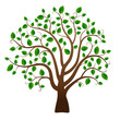 Obrazy na płótnie, fototapety, zdjęcia, fotoobrazy drukowane : Green tree on white background