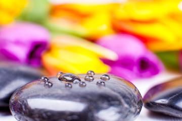 Tulpen schwarzer Stein