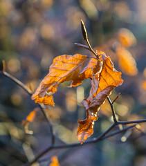 brown leaf at tree