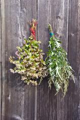 buckwheat and  mugwort Artemisia vulgaris bunch on old wall