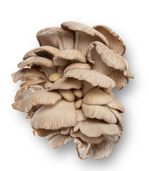 Oyster mushrooms, close-up.