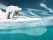 Leinwanddruck Bild - Polar Bear