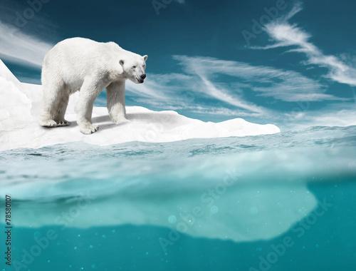 Polar Bear - 78580107