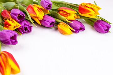 Tulpen Rahmen 3