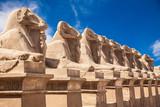 Fototapeta Avenue of the ram-headed Sphinxes. Karnak Temple. Luxor, Egypt