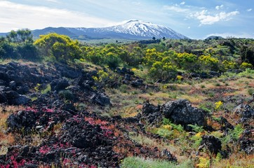 Snowcapped volcano and flowers on a lava field