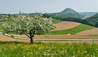 Spring landscape  .